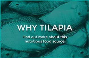 Why Tilapia